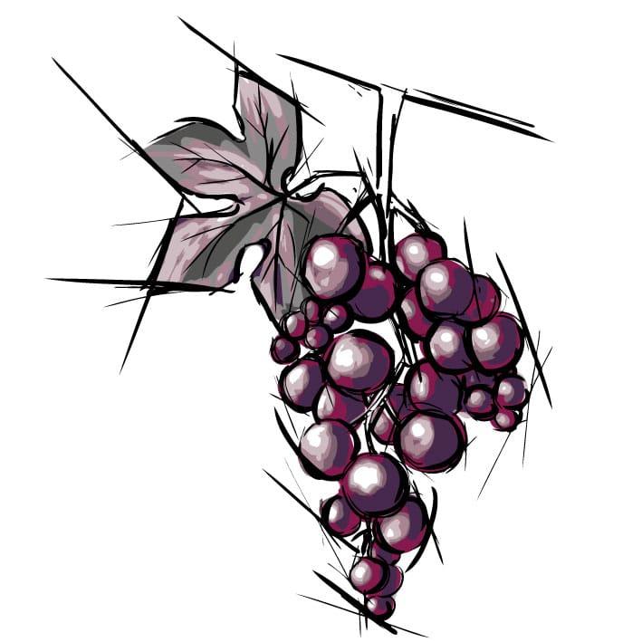 Cépage vin rouge