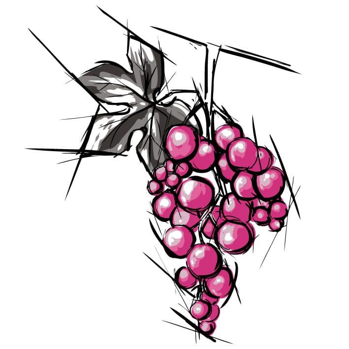 Cépage vin rosé